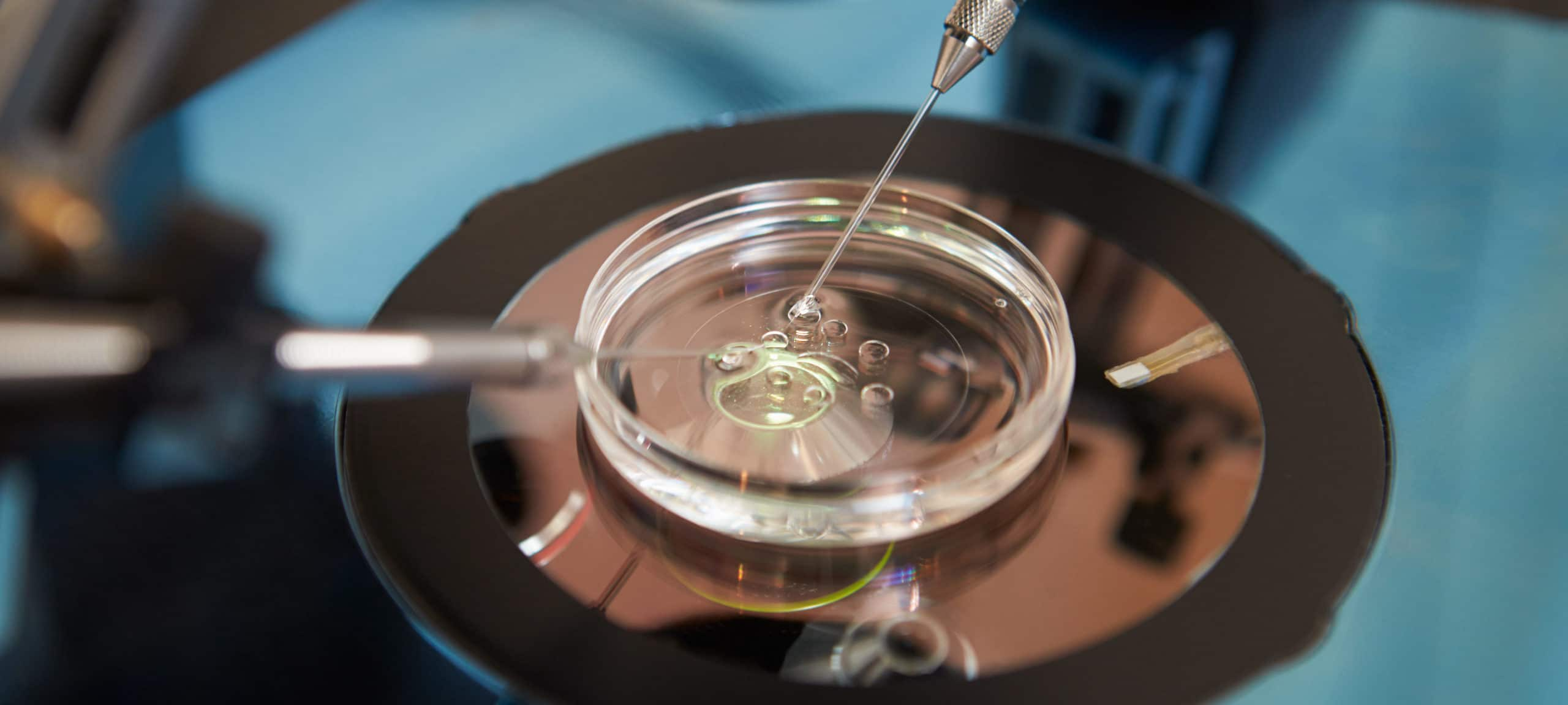 Laboratory Fertilization Of Eggs In IVF Treatment